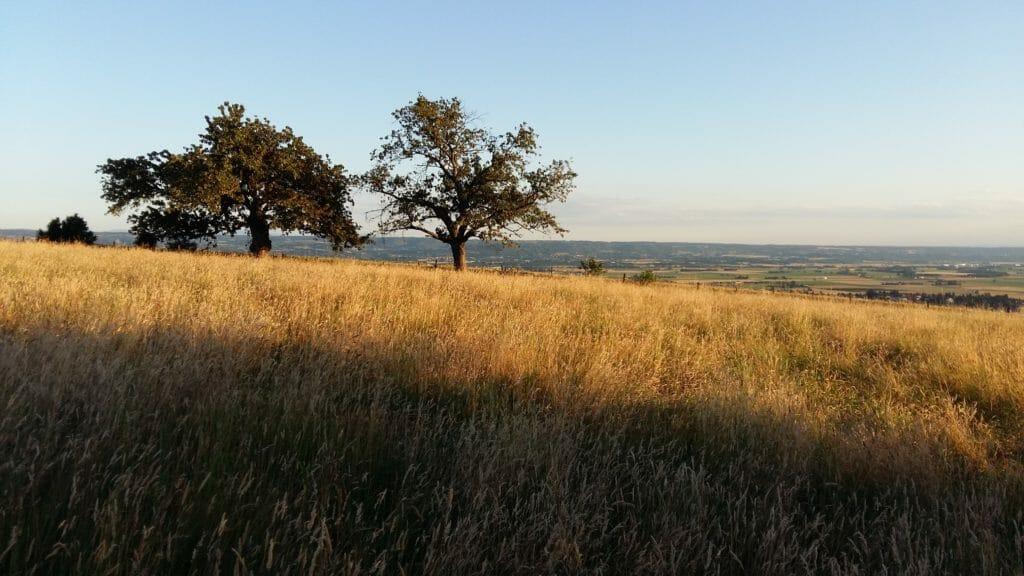 Vue sur les champs au mois de Juin